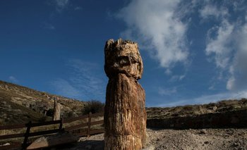 Científicos griegos descubren árbol petrificado de 20 millones de años