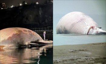 Hallan una ballena de 20 metros varada en Nápoles