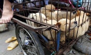 Madre alimentaba a sus hijos con carne de perro