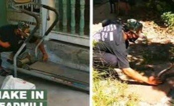 Serpiente quedó atrapada en una máquina al intentar cazar a una rana