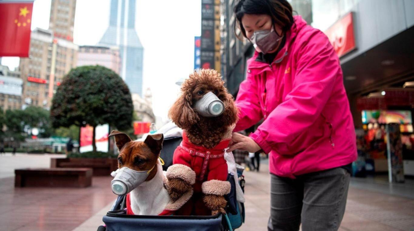 NOTICIAS: Perro da positivo por coronavirus y es puesto en cuarentena