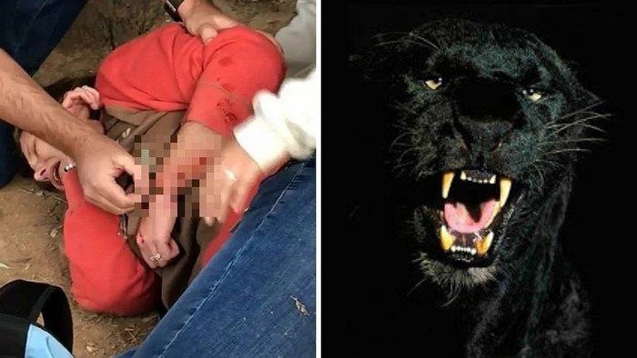 Por poco se muere por una selfie con un jaguar