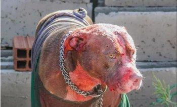 Murió despúes de sufrir feroz ataque de siete perros pitbull