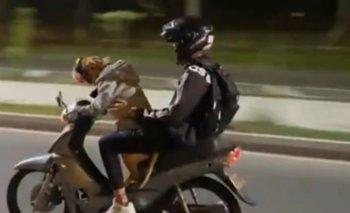 Video: Un hombre puso a su perro a manejar la moto