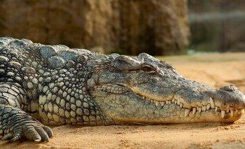 Un cocodrilo de más de 5 metros se traga el cuerpo de un niño de 8 años ante la mirada de su padre