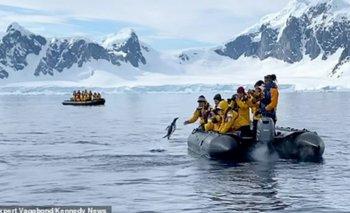 Vídeo: Un pingüino escapa de unas orcas arrojándose a un bote lleno de turistas en la Antártida