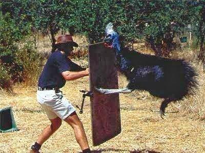 Hermosa ave mata a su dueño con sus filosas garras