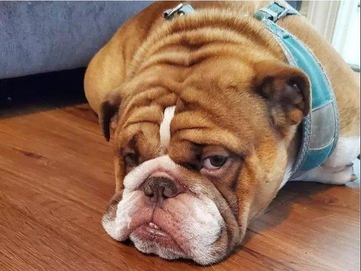 La desgarradora foto de un perro que extraña jugar por la cuarentena