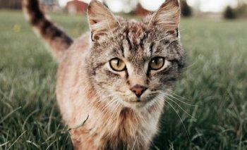 Liberan a miles de gatos para combatir la plaga de ratones en Chicago