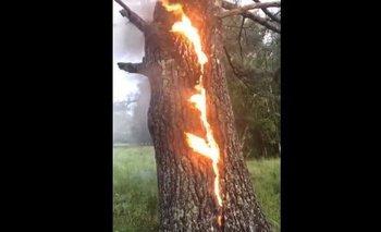 Un árbol en llamas ¡desata un mal presagio!