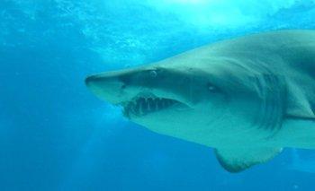 VIDEO: tiburón blanco embiste un bote y mastica su motor