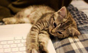 """Gato escribe """"artículo"""" para una web especializada en videojuegos"""