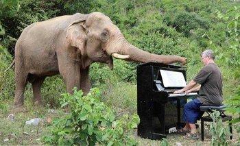 VIDEO: Beethoven es el pianista favorito de Mongkol, un elefante rescatado