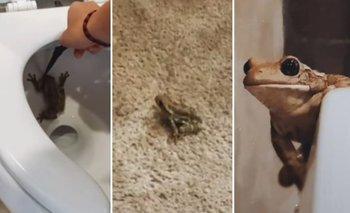 Video: Mujer se encuentra una enorme rana dentro de su inodoro