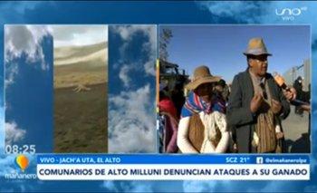 Jauría de perros salvajes atacan a ovejas, alpacas y llamas causándoles la muerte en Alto Milluni