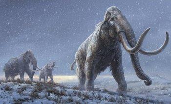Prometen traer a la vida a los mamuts lanudos extintos hace miles de años