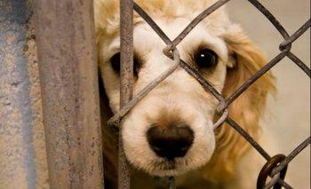 Tenía 70 perros enjaulados y recibió pena máxima por maltrato animal
