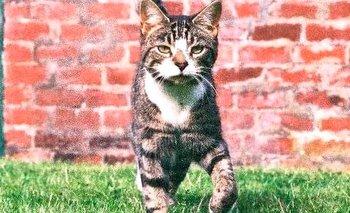 Gato se reencuentra con sus dueños tras 10 años desaparecido