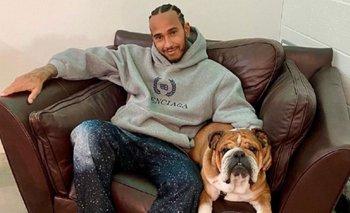 Lewis Hamilton podría verse envuelto en proceso judicial por hacer vegano a su perro.