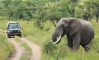 Elefante mata a un cazador furtivo dentro de un parque nacional de Sudáfrica