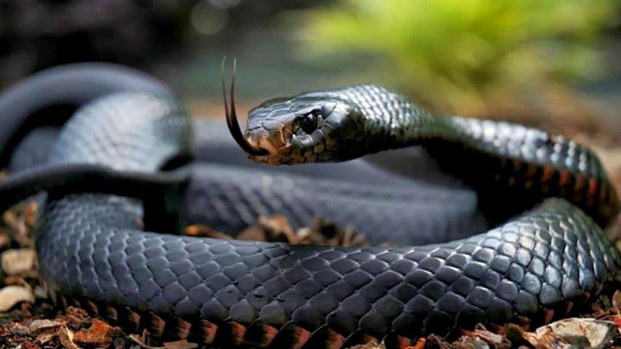 Niños usan serpiente muerta para saltar la cuerda