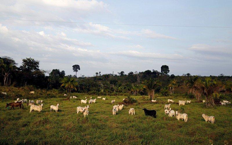 Catastrófico: El Amazonia sufre la mayor pérdida de vegetación desde 2008