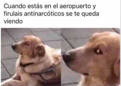 Video El Por Que Se Les Dice Firulais A Todos Los Perros Red Uno De Bolivia