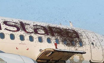 Enjambre de abejas se apodera de un avión y causa pánico